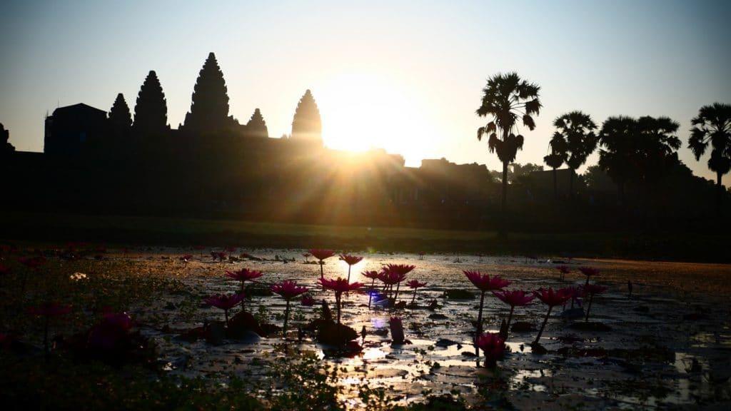 Seerosen zum Sonnenaufgang vor Angkor Wat