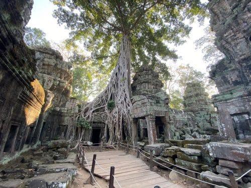 Ta Prohm - der Dschungeltempel mit den bekannten Baumwurzeln im Mauerwerk.