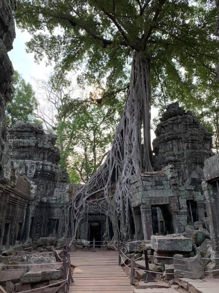 Der Ta Prohm Tempel - keine Menschenseele zu sehen!
